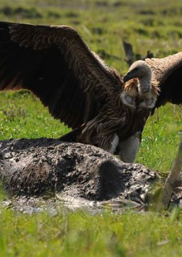 Vulture Photo Exhibitions for vulture conservation