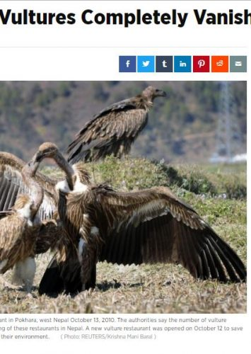 Will Vultures Completely VanishFrom India?